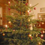 もみの木クリスマスツリー